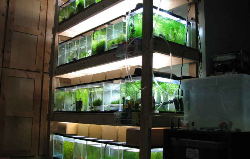 Returning to the fish room…